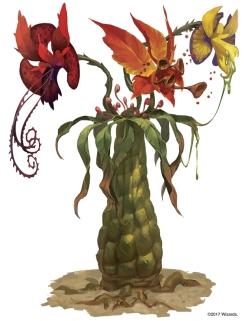 Tri-flower frond
